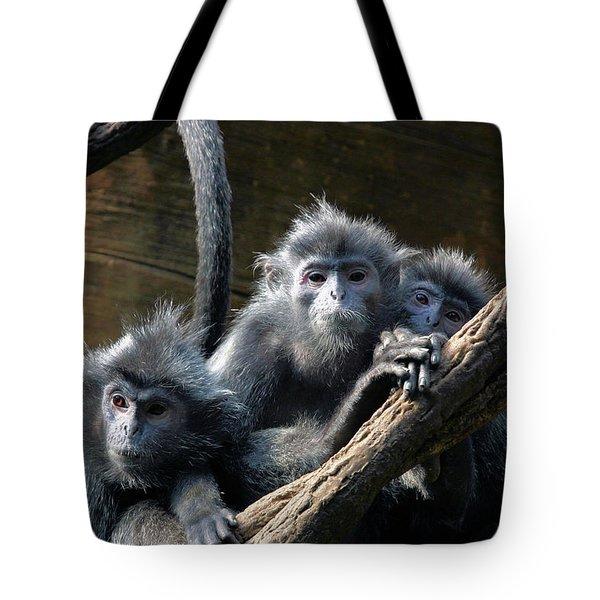 Monkey Trio Tote Bag by Karol Livote