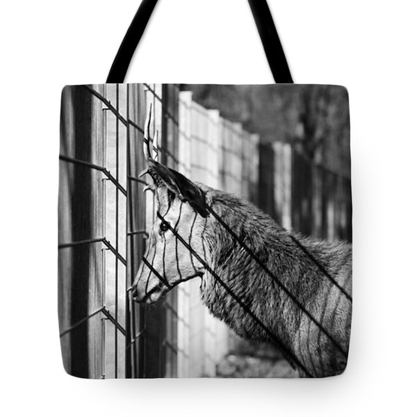 #monochrome #canon #cage #blackandwhite Tote Bag