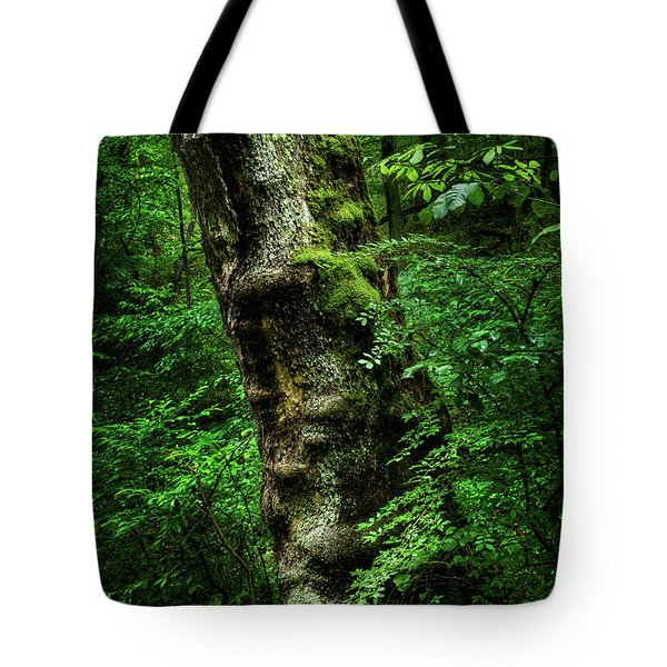 Tote Bag featuring the photograph Moody Tree In Forest by Dennis Dame