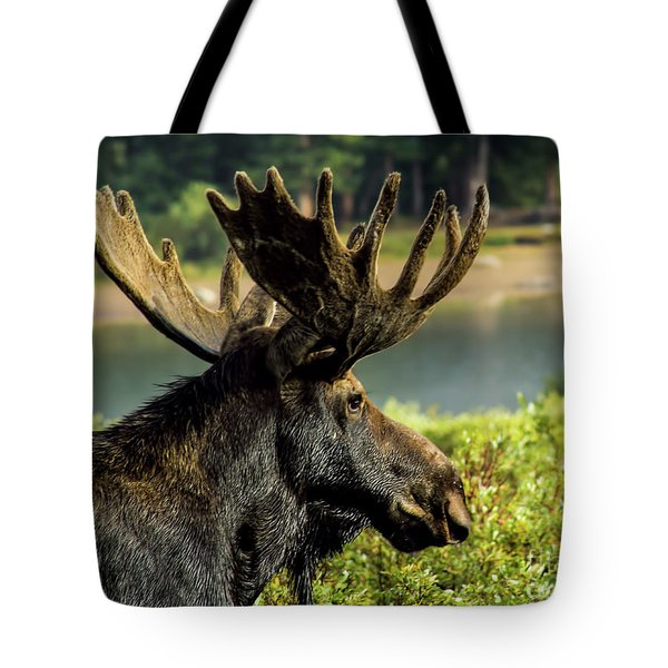 Moose Adventure Tote Bag