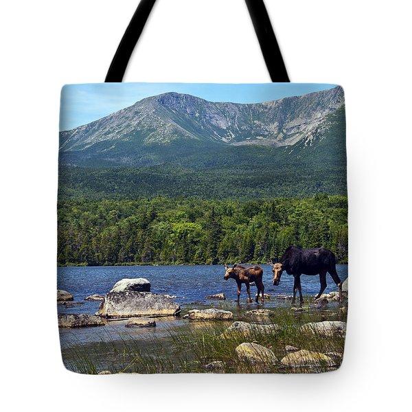 Moose Baxter State Park Maine 2 Tote Bag