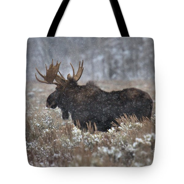 Tote Bag featuring the photograph Moose In The Snowy Brush by Adam Jewell