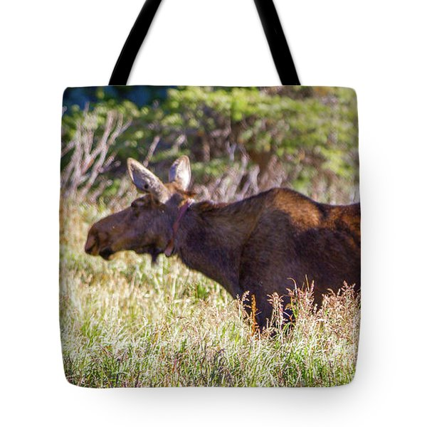 Moose In Waiting Tote Bag