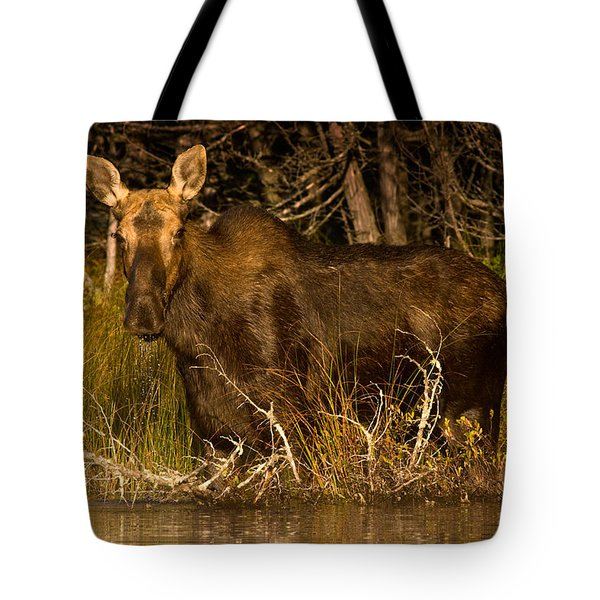 Moose Of Prong Pond Tote Bag