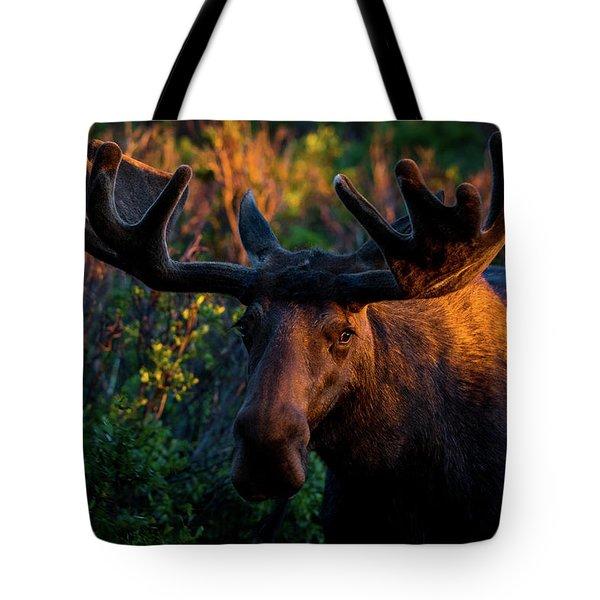Moose Sunrise Tote Bag