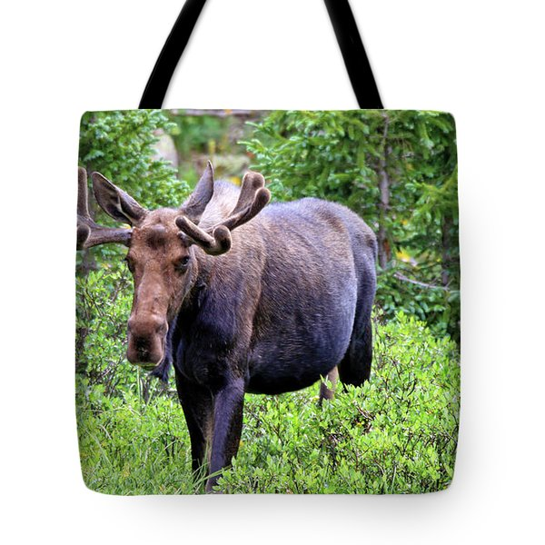 Tote Bag featuring the photograph Moose Trail by Scott Mahon