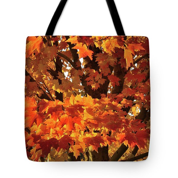 Tote Bag featuring the photograph Moraine Hills Sugar Maple by Ray Mathis