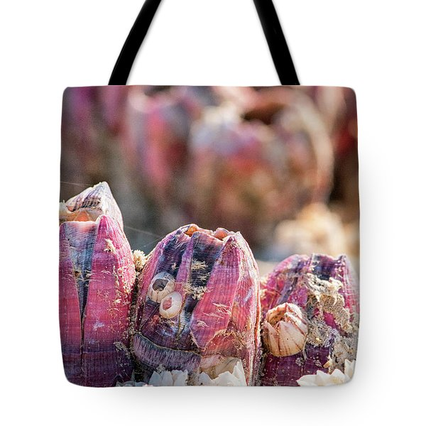 More Barnacles Tote Bag