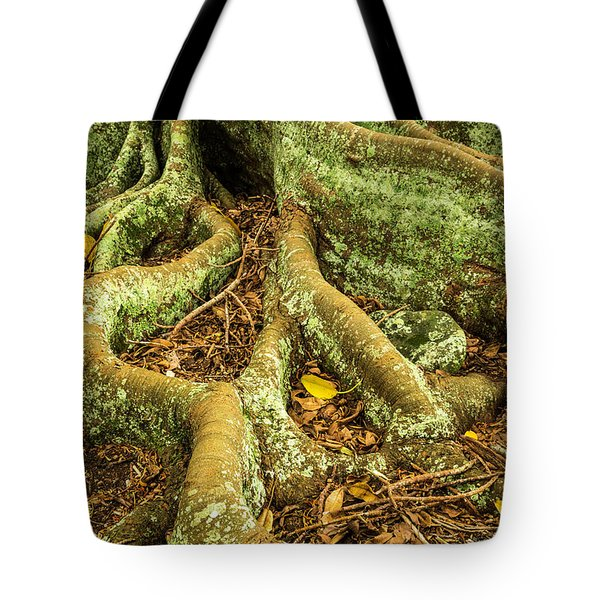 Tote Bag featuring the photograph Moreton Bay Fig by Werner Padarin