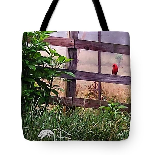 Tote Bag featuring the photograph Morning Cardinal by Deb Martin-Webster