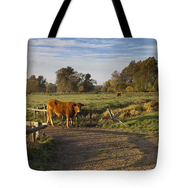 Morning Cow Tote Bag
