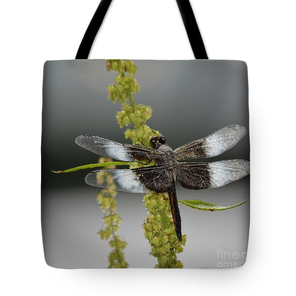 Morning Dew Tote Bag by Randy Bodkins