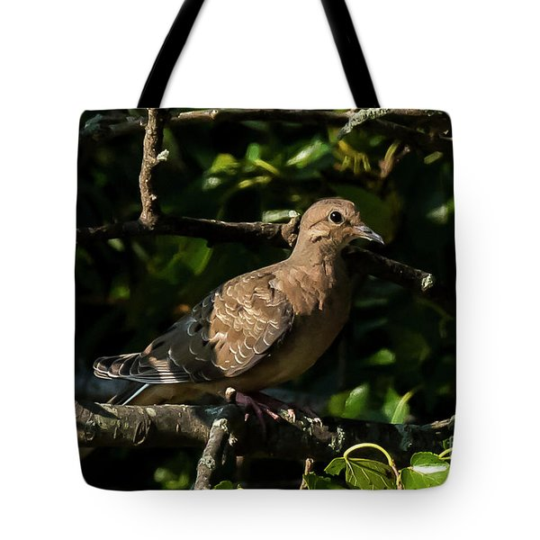 Tote Bag featuring the photograph Morning Dove by Michael D Miller