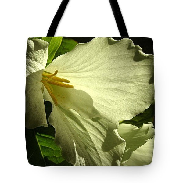 Tote Bag featuring the photograph Morning Light - Trillium by Angie Rea