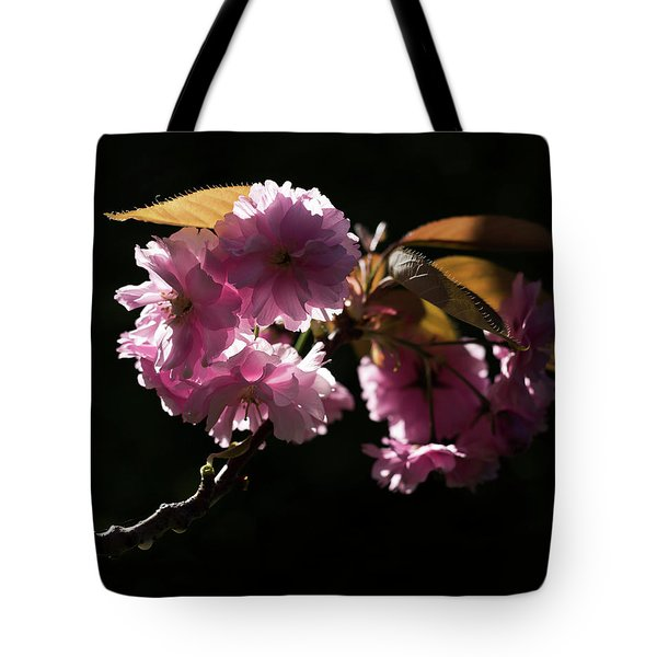 Tote Bag featuring the photograph Morning Light by Helga Novelli