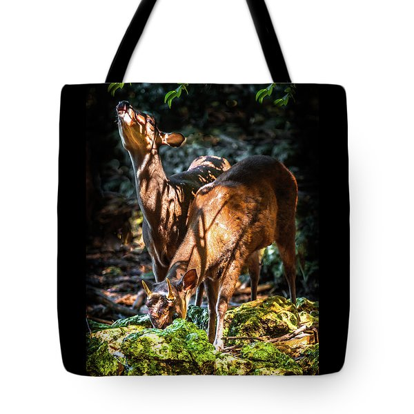 Morning Light Of Dawn Tote Bag by Karen Wiles
