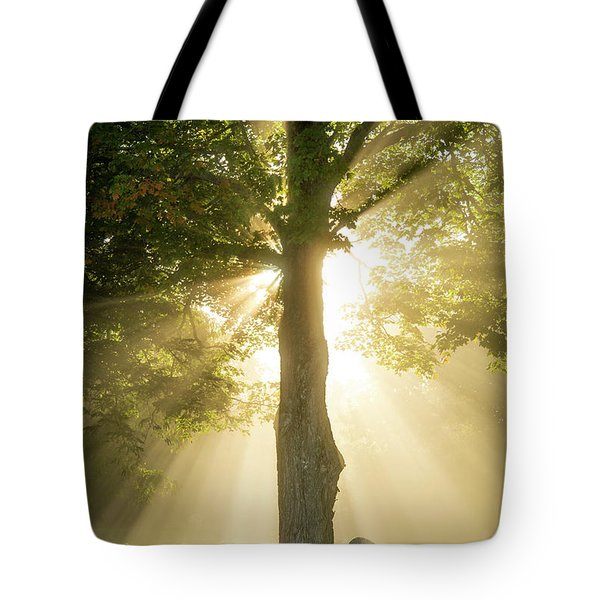 Morning Light Shining Down Tote Bag by Alana Ranney