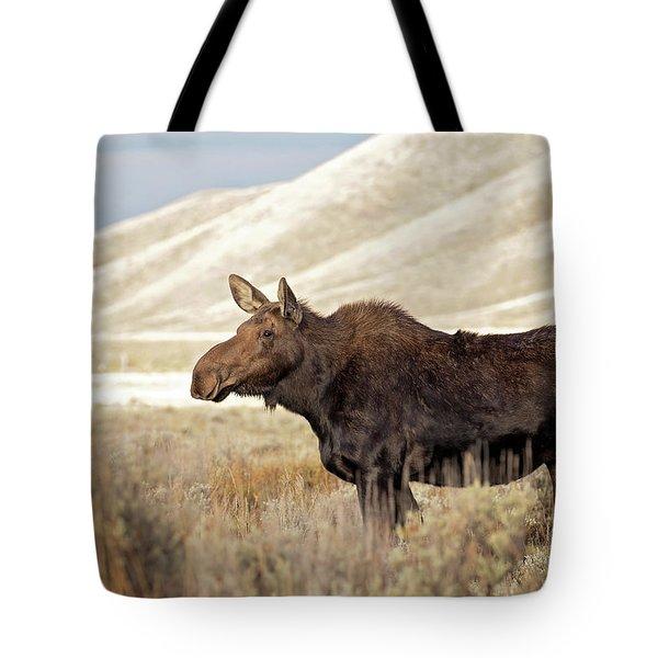 Morning Moose Tote Bag