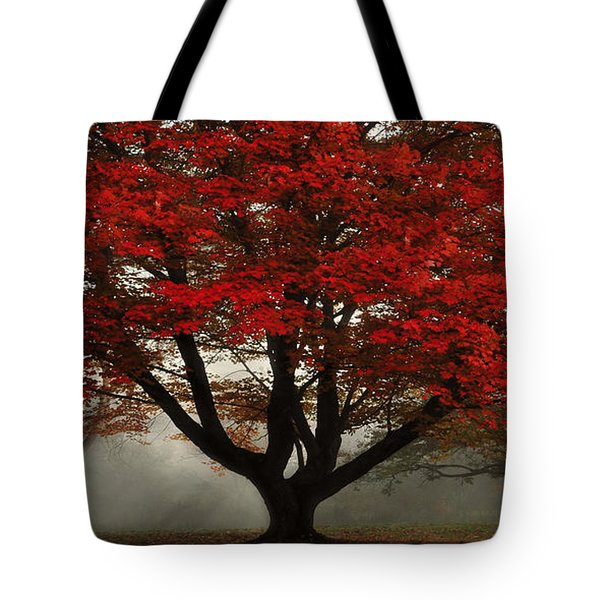 Tote Bag featuring the photograph Morning Rays In The Forest by Ken Smith
