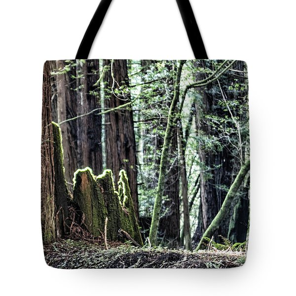 Tote Bag featuring the photograph Morning Redwoods by Shirley Mangini