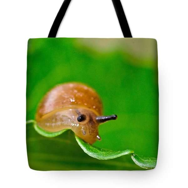 Morning Snail Tote Bag