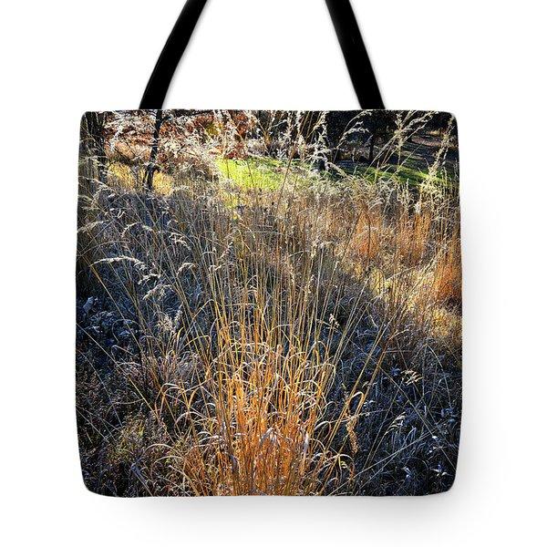 Morning Sun Backlights Fall Grasses In Glacial Park Tote Bag