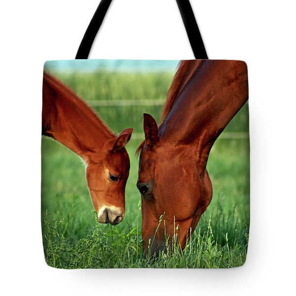 Mother And Foal 3377 H_2 Tote Bag