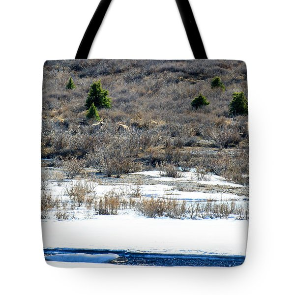 Mother Grizzly And Cub  Tote Bag by Allan Levin