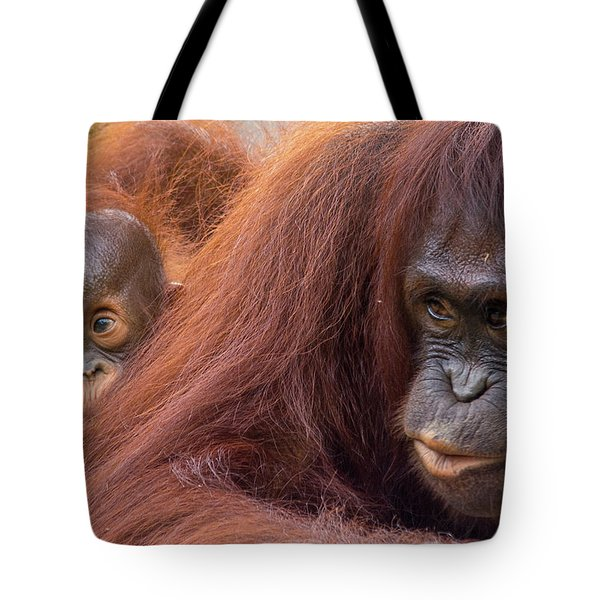 Mother Orangutan With Baby Tote Bag