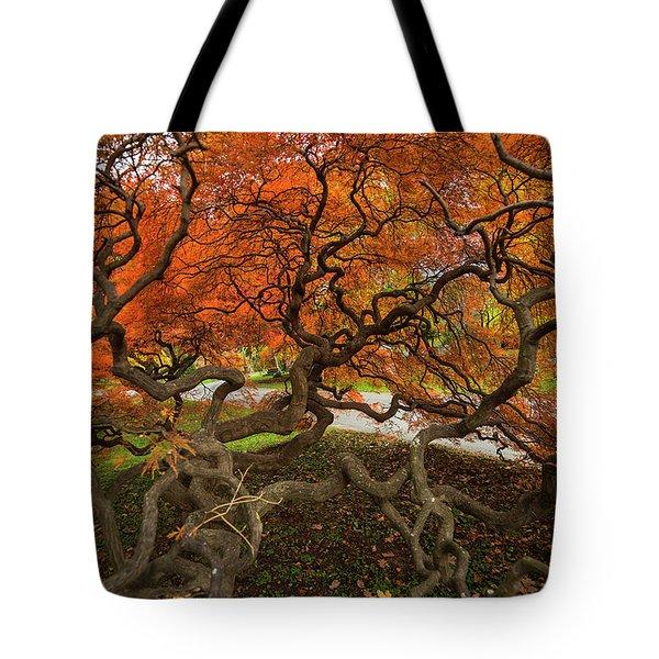 Mount Auburn Cemetery Beautiful Japanese Maple Tree Orange Autumn Colors Branches Tote Bag
