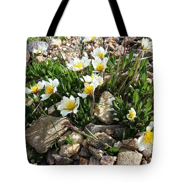 Mountain Avens Tote Bag by Scott Kingery
