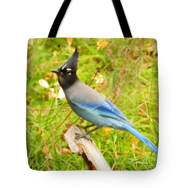 Mountain Blue Jay Tote Bag