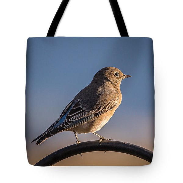 Mountain Bluebird At Sunset Tote Bag by John Brink
