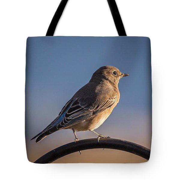 Mountain Bluebird At Sunset Tote Bag