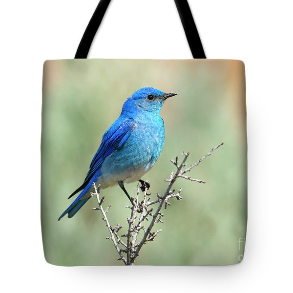 Mountain Bluebird Beauty Tote Bag by Mike Dawson