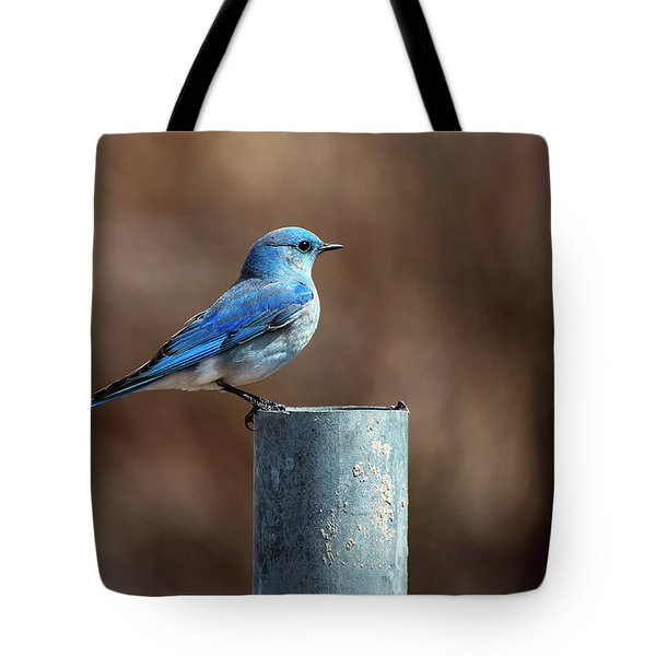 Mountain Bluebird Tote Bag by Eric Nielsen