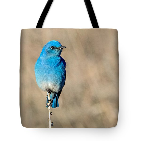 Mountain Bluebird On A Stem. Tote Bag