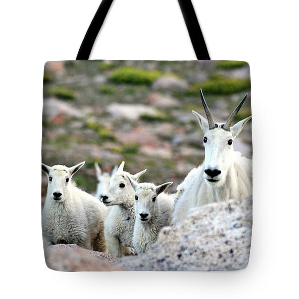 Tote Bag featuring the photograph Mountain Goat Family Panorama by Scott Mahon