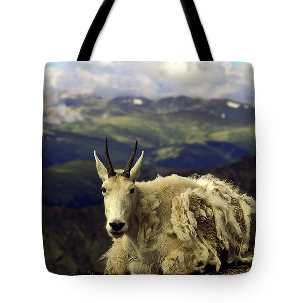 Mountain Goat Resting Tote Bag by Sally Weigand