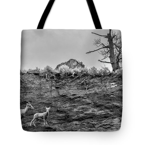 Mountain Goat With A Kid For A Walk Tote Bag