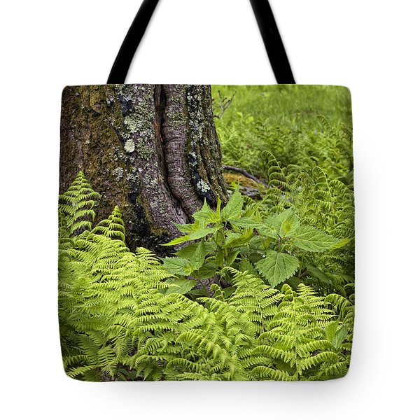 Mountain Green Ferns Tote Bag