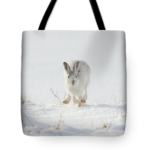 Mountain Hare Approaching Tote Bag
