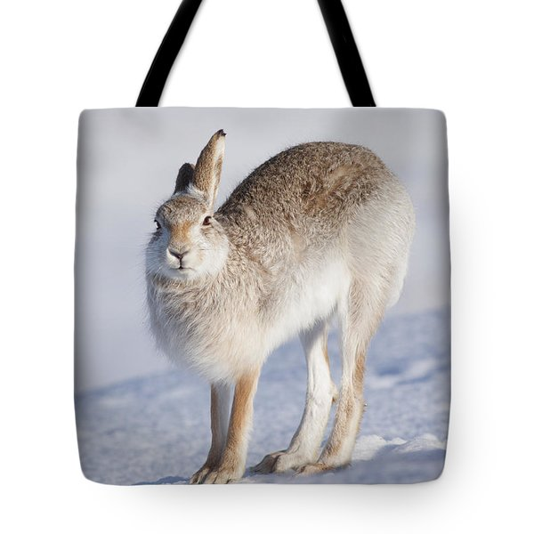Mountain Hare In The Snow - Lepus Timidus  #2 Tote Bag