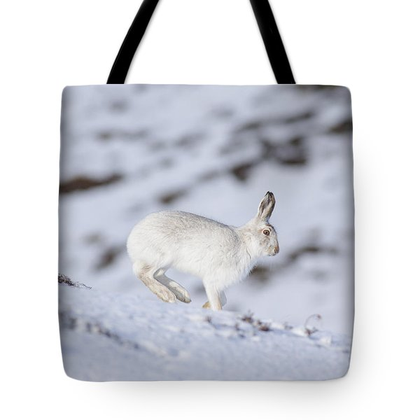 Mountain Hare - Scottish Highlands  #12 Tote Bag