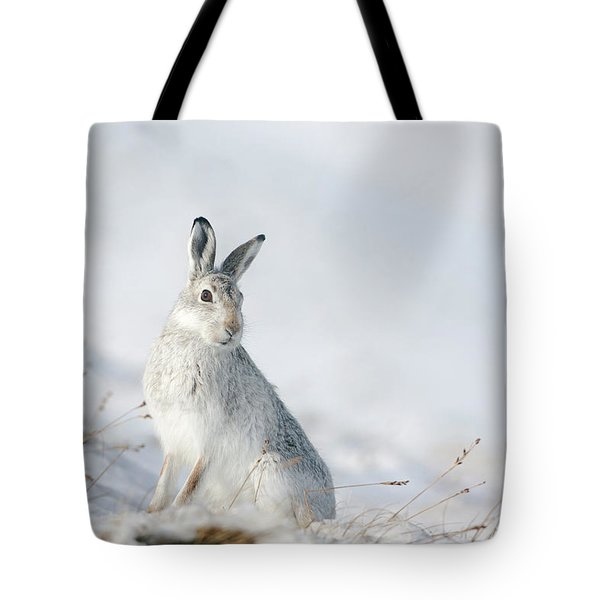 Mountain Hare Sitting In Snow Tote Bag
