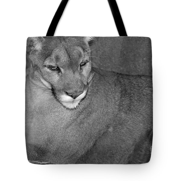 Mountain Lion - Sonoran Desert Museum  Tote Bag by Donna Greene
