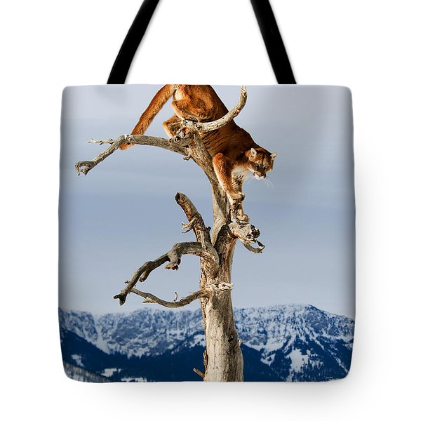Mountain Lion In Tree Tote Bag
