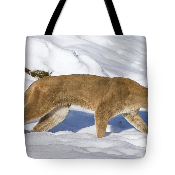 Mountain Lion Puma Concolor Hunting Tote Bag by Matthias Breiter