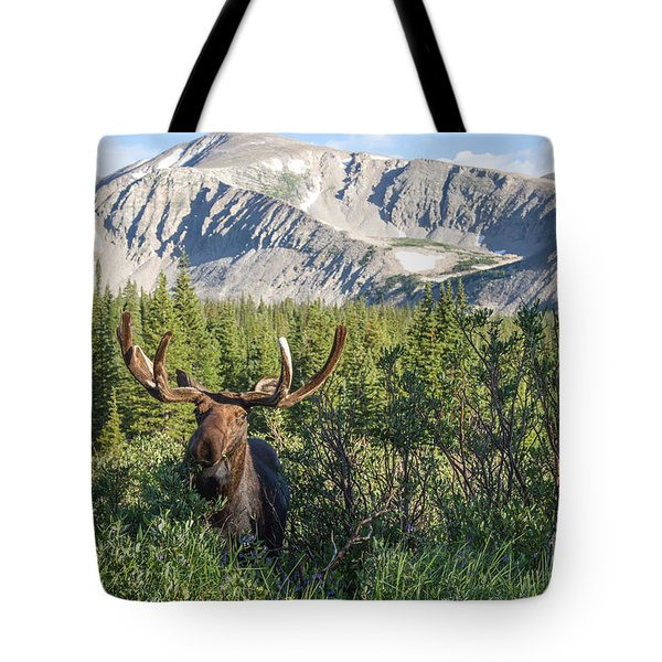 Mountain Moose Tote Bag by Chris Scroggins