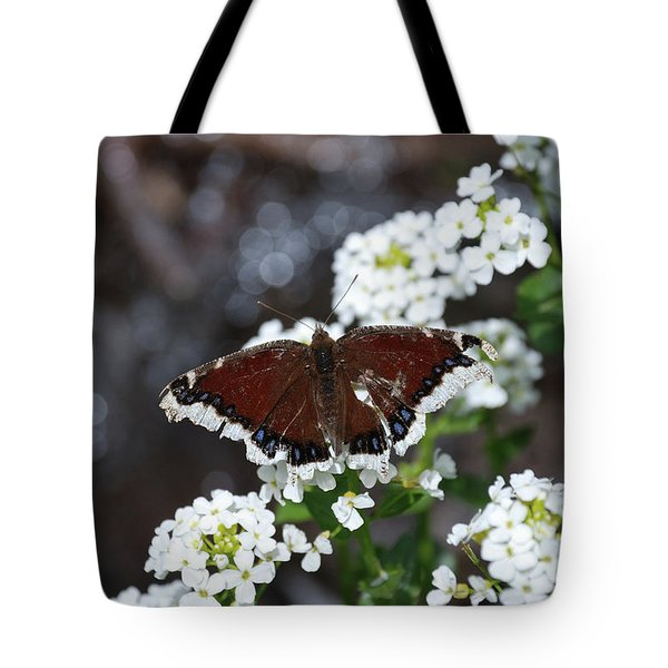 Mourning Cloak Tote Bag by Jason Coward